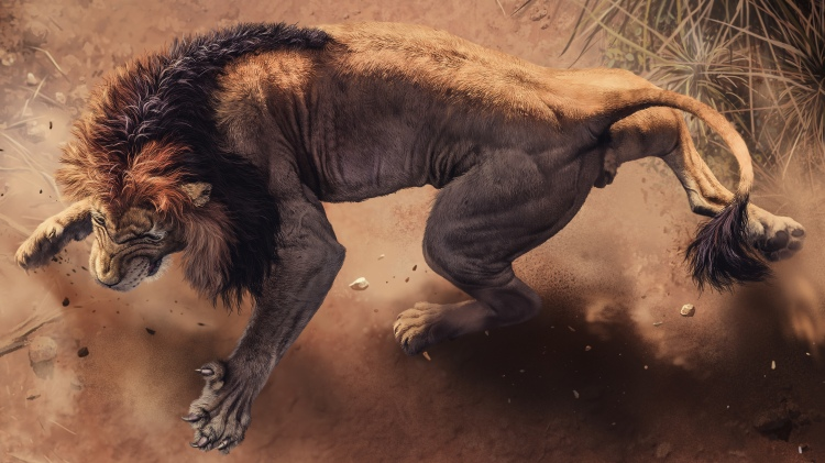 wild_african_lion_4k